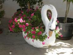 Výstava květin